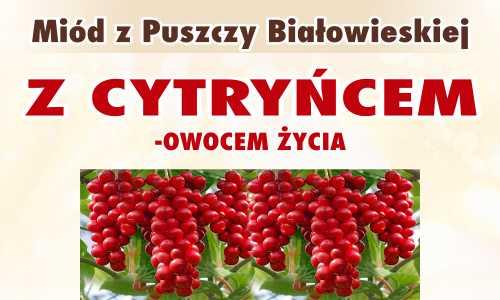 Miód z Puszczy Białowieskiej z cytryńcem