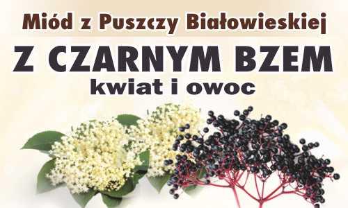 Miód z Puszczy Białowieskiej z czarnym bzem (kwiat i owoc)