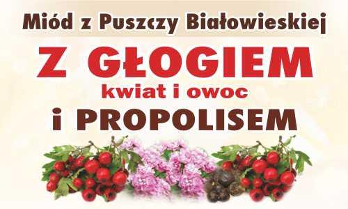 Miód z Puszczy Białowieskiej z głogiem (kwiat i owoc) i propolisem