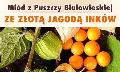 Miód z Puszczy Białowieskiej ze Złotą Jagodą Inków