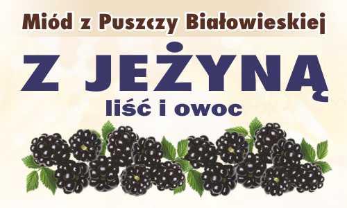 Miód z Puszczy Białowieskiej z jeżyną (liść i owoc)