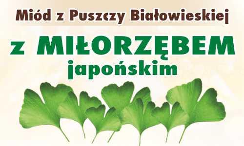Miód z Puszczy Białowieskiej z miłorzębem japońskim