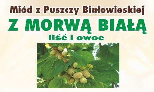 Miód z Puszczy Białowieskiej z morwą białą (liść i owoc)