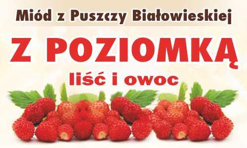 Miód z Puszczy Białowieskiej z poziomką (liść i owoc)
