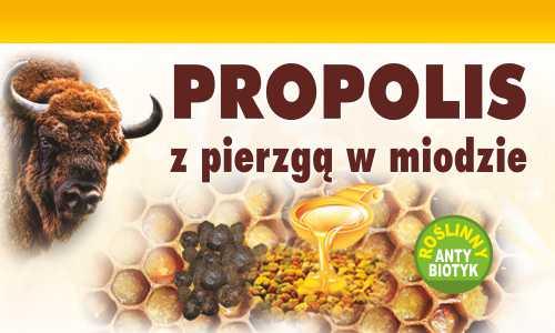 Propolis z pierzgą w miodzie Roślinny Antybiotyk