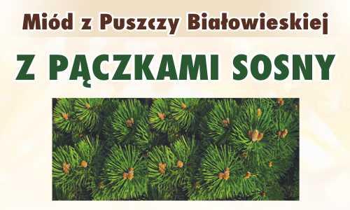 Miód z Puszczy Białowieskiej z pączkami sosny